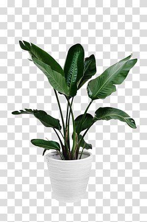 36+ White pot leaf clipart ideas