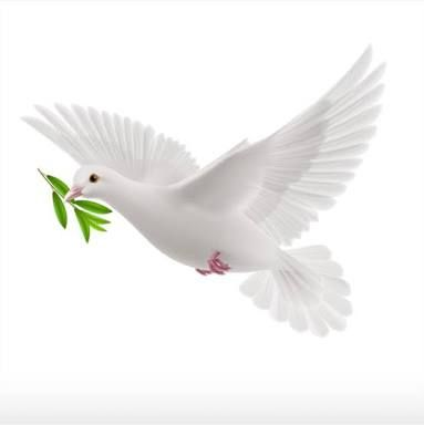 Image Result For Paloma Blanca Dove Images Dove Pictures Dove Sketches