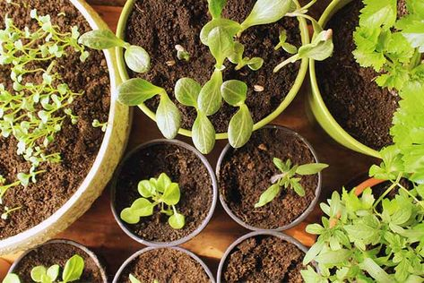 Planning and Planting Your First Vegetable Garden
