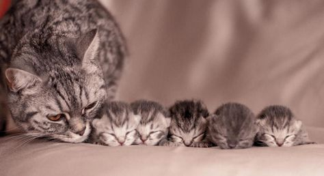 Mama and her babies