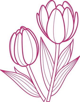 Resultado De Imagem Para Tulip Drawing Outline Tulip Drawing Outline Drawings Flower Outline