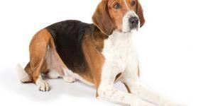 Todas Las Razas De Perros Nombres Fotos Y Características Página 2 Razas De Perros Razas De Perros Grandes Diferentes Razas De Perros
