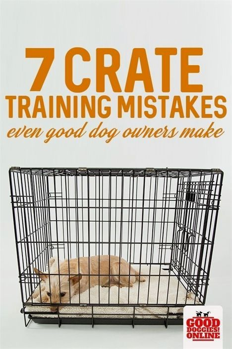 Best Dog Training Click The Image For Various Dog Obedience And