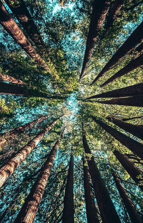 Upward View #nature #forest #hike #wild #trail #vacation #photography #pretty #beautiful #light #color #green #trees #tree