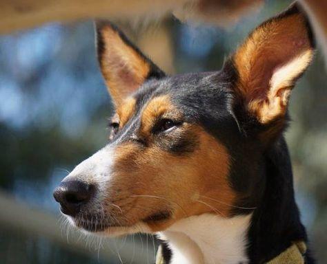 Bild Zoom Tierheim Tiere Hund Und Katze
