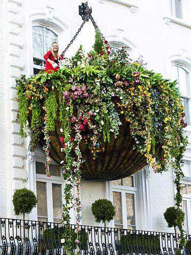 now this is a hanging basket