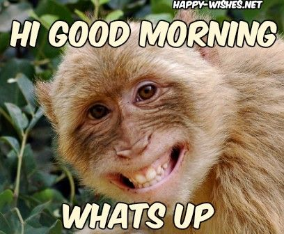 8 Good Morning Wishes With Monkey Images With Images Monkeys