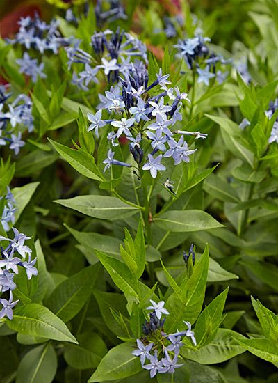 10 Low Maintenance Perennials For Your Garden Flowers Perennials