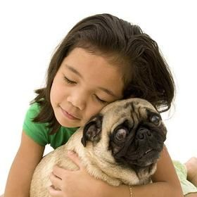 Are Pugs Good With Kids Best Dogs For Families Dogs Kids Dog