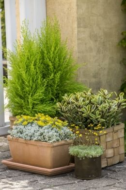 Ogrod W Doniczce Kompozycje Kwiatowe Na Balkon Artykuly Garden Pots Plants Garden