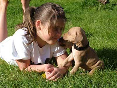 Love Your Ridgeback Puppy Rhodesian Ridgeback Puppies Cute Baby Animals Rhodesian Ridgeback