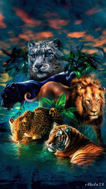 Soo Much Beauty With Images Big Cats Art Wild Cats Animals