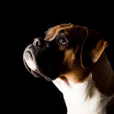 Urlaub Ohne Hund Teil 2 Wieder Zuhause Hunde