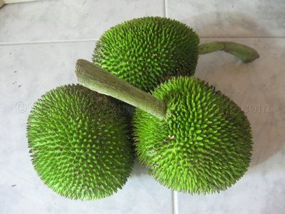 Chataigne: This fruit looks very similar to Breadfruit in its natural form, the only difference is that the skin of the Chataigne has a prickly surface. The skin of both these fruits are vivid green in color.