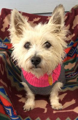 Col Potter Cairn Rescue Network Sunday Sweets Cute Dogs