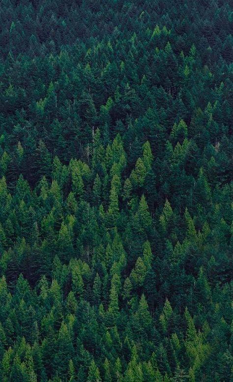 Fondos de pantalla bosque