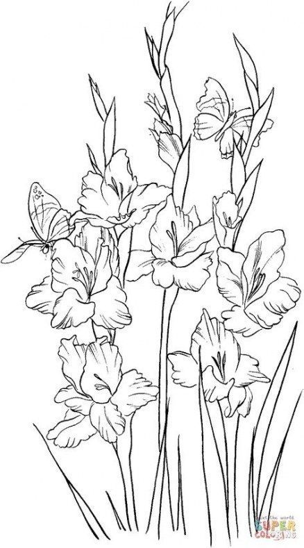 Gladioli Drawing Bulbs Gladioli Drawing Gladioli Drawing Gladiolenzeichnung Dessin De Glaieuls Dibujo De In 2020 Flower Drawing Flower Sketches Drawings