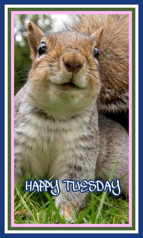 Happy Tuesday Funny Squirrel Pictures Funny Animals Squirrel Funny