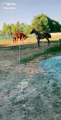 HOW TO CALM YOUR HORSE FAST