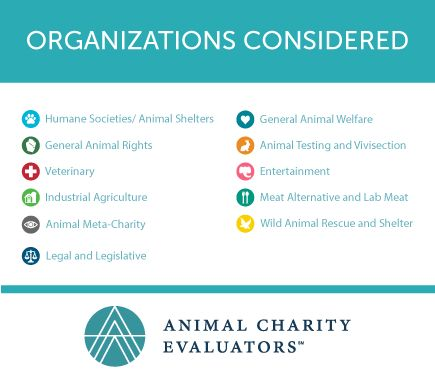 A list of the 100 animal charity organizations that we examined in - charity evaluation