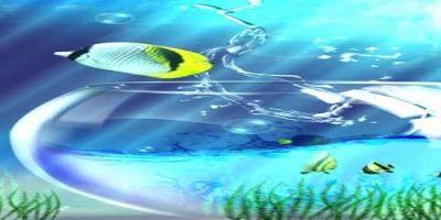 تحميل افضل برنامج خلفيات Hd للصور في العالم للاندرويد 2020 Wallpaper Hd Wallpaper Fish Pet Wallpaper