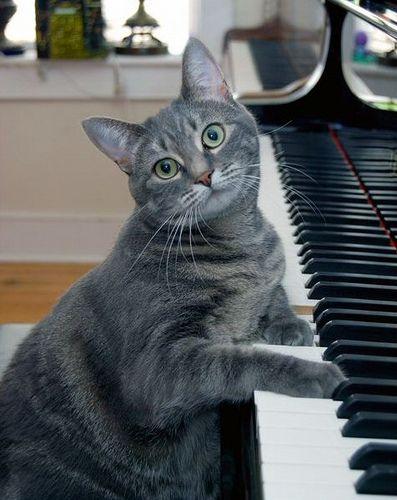 Jynx Plays Jazz Cats Rare Cats Cat Shelter