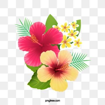 Fresh Hibiscus Flowers Creative Cartoon Png And Vector With Transparent Background For Free Download