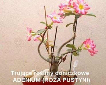 Niesamowite Ten Jeden Skladnik Leczy Bole Stawow Plecow Wzmacnia Kosci Rosliny Doniczkowe Rosliny Niesamowite