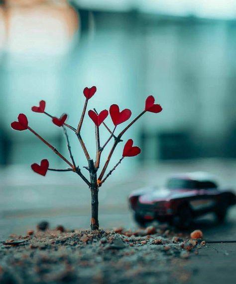ومع تراتيل الصباح عزفت على وتر الشوق لحن الحنين إليك صباح الشوق Beautiful Wallpapers Backgrounds Happy Wallpaper Valentines Wallpaper