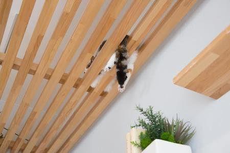 これで仲良く暮らせるニャ ペットと人が快適に暮らせるリノベーションプランが新登場 ねとらぼ 猫 ペット 猫 マンション