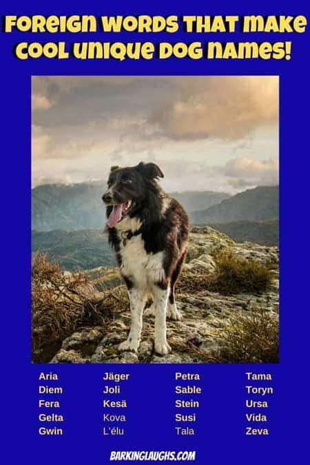 Unique Dog Names And Meanings 200 Unusual Names And Name Quiz In 2020 Girl Dog Names Unique Boy Dog Names Unique Puppy Names Unique