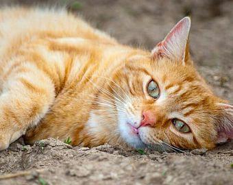 Tortoise Shell Cat Cross Stitch Pattern Tortie Pattern Cat Etsy