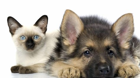 Many Families Own At Least One Pet And These Pets Quickly Become