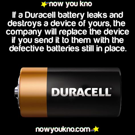 That S Nice D Wtf Fun Facts Fun Facts Life Facts