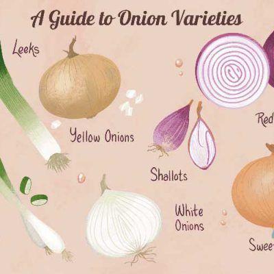 دانلود کتاب راهنمای پیاز خوراکی کاشت داشت و برداشت نواندیشان Yellow Onion White Onion Red Yellow