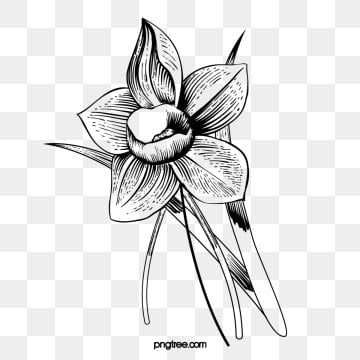 Kwiat Czarno Bialy Roslina Rysunek Linii Roslina Kwiat Clipart Czarno Bialy Kwiat Czarno Bialy Rysunek Png I Plik Psd Do Pobrania Za Darmo Flower Line Drawings Plant Drawing Flower Clipart