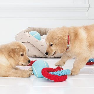 Cleaning Pet Toys Tips From Marthastewartpets Dogs Dog Toys Pets