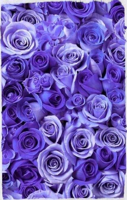 51 Trendy Flowers Purple Wallpaper Inspiration Flowers Purple