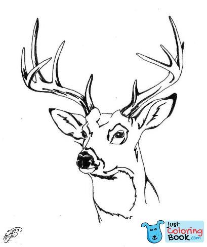 Whitetail Deer Head Coloring Pages With Images Deer Coloring