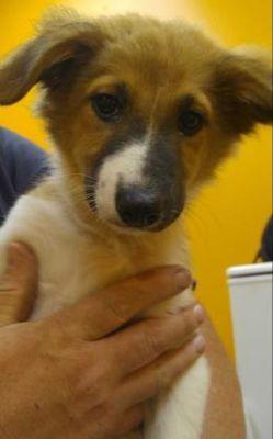Adopt Millie On Petfinder Dog Adoption Help Homeless Pets Pet Adoption