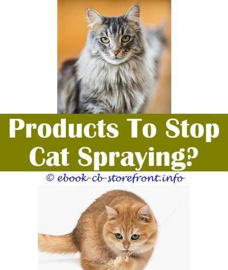 Insane Ideas Can Change Your Life Do Male Cats Spray All The Time Homemade Spray To Keep Cats Away Flea And Tick Spray For Cats Walmart Detangle Spray For Cats