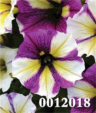 Pin By Kesavan Alagesan On Morning Greeting In 2020 Petunia Flower Bonsai Plants Petunias