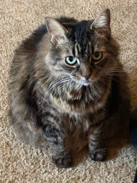 Big Fluffy Kitty The Animal Rescue Site Animal Rescue Animal Rescue Site Animal Rescue Stories