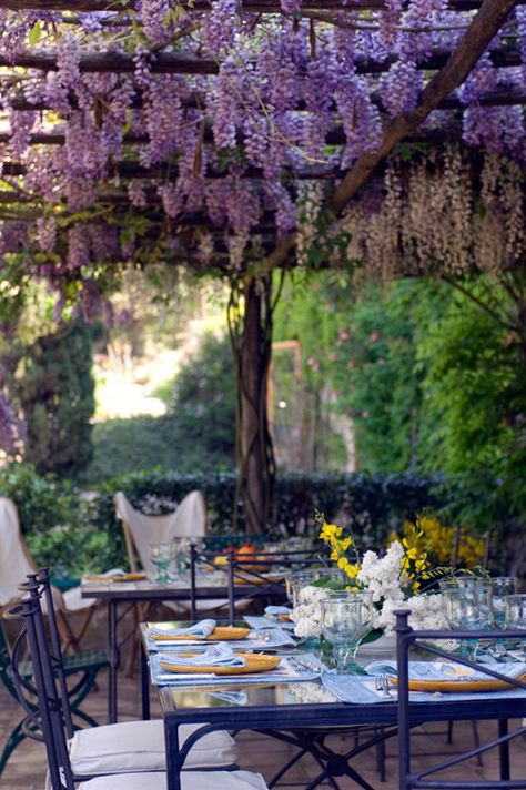 Dining under Wisteria, Val d'Orcia