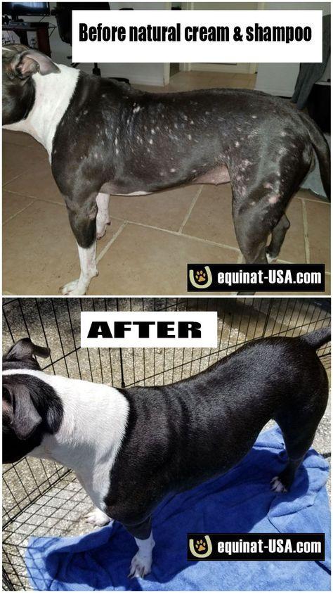 How To Treat Pitbull Skin Problems Itchy Dog Pitbulls Skin