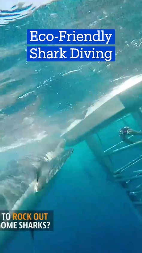 Eco-Friendly Shark Diving