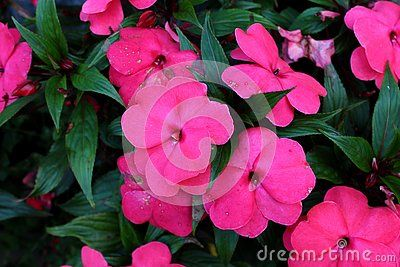 Pin On Flowers Stock Photography