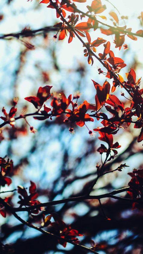 Iphone Wallpaper Tumblr Cactus those Iphone Wallpaper Hd ...