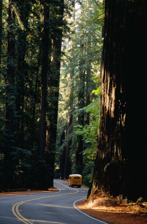 Avenue of the Giants: Northern California's Most Spectacular 39 Miles Avenue of the Giants: See the California Redwoods Up Close California Dreamin', Northern California, Places To Travel, Places To Visit, Roadtrip, The Great Outdoors, Beautiful Places, Beautiful Beach, Travel Inspiration