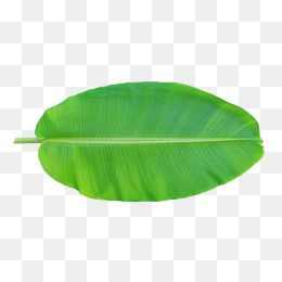 Banana Leaf Png Hd